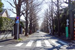 道路,町,屋外,冬,晴れ