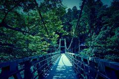 橋,村,屋外,夏,晴れ