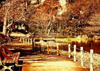 公園,町,屋外,冬,晴れ,ヴィンテージ