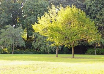公園,町,屋外,晴れ,秋