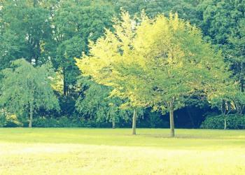 公園,町,屋外,秋,晴れ,昭和レトロ
