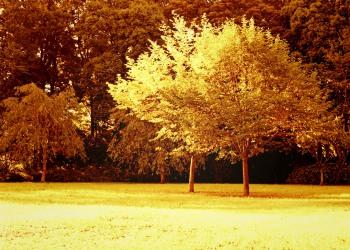 公園,町,屋外,秋,晴れ,ヴィンテージ