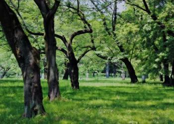 公園,町,屋外,晴れ,春