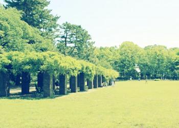 公園,町,屋外,夏,晴れ,昭和レトロ