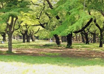 公園,町,屋外,夏,晴れ