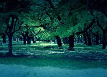 公園,町,屋外,夏,晴れ,ホラー