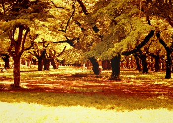 公園,町,屋外,夏,晴れ,ヴィンテージ