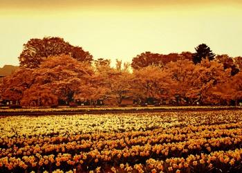 公園,町,屋外,春,晴れ,ヴィンテージ