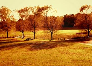 公園,町,冬,屋外,曇り,ヴィンテージ