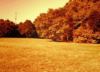公園,町,屋外,秋,ヴィンテージ