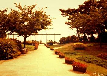 公園,町,屋外,夏,ヴィンテージ