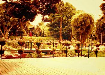 公園,町,屋外,夏,曇り,ヴィンテージ