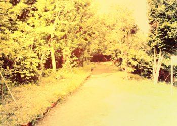 公園,町,晴れ,屋外,ヴィンテージ