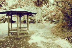 公園,町,晴れ,屋外