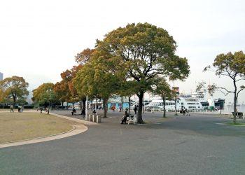 港,都市,公園,屋外,秋,曇り