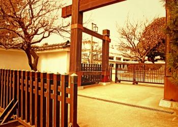 日本庭園,和,屋外,春,曇り,ヴィンテージ