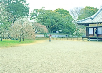 日本庭園,和,曇り,屋外,春,昭和レトロ
