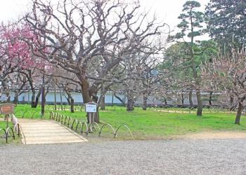 日本庭園,和,曇り,屋外,春