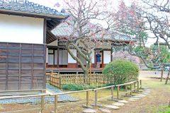 日本家屋,日本庭園,村,屋外,冬,曇り