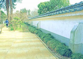 日本家屋,日本庭園,和風,屋外,春,晴れ,昭和レトロ