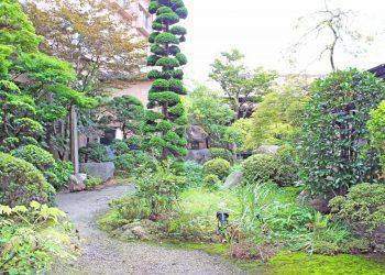 日本庭園,和風,屋外,春,晴れ