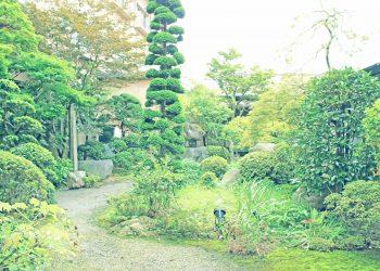 日本庭園,和風,屋外,春,晴れ,昭和レトロ