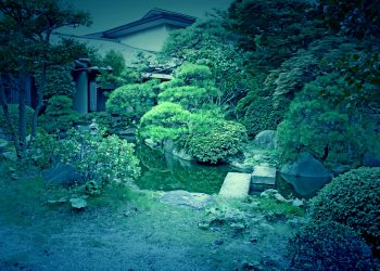 日本庭園,和,屋外,夏,曇り,ホラー