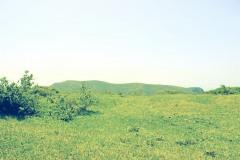 草原,アウトドア,屋外,夏,晴れ