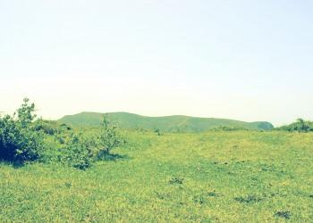 草原,アウトドア,屋外,夏,晴れ,昭和レトロ