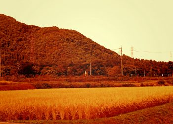 草原, 村, 屋外, 秋, 晴れ,ヴィンテージ