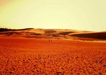 草原, 砂丘,アウトドア, 屋外, 晴れ,ヴィンテージ