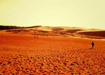 草原,砂丘,アウトドア,屋外,晴れ,ヴィンテージ