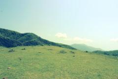 草原,アウトドア,晴れ,屋外,夏