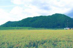 草原,アウトドア,屋外,夏