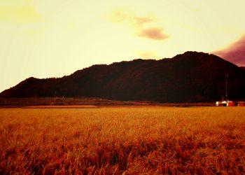 草原,アウトドア,屋外,夏,ヴィンテージ