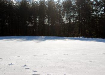 草原,雪原,アウトドア,晴れ,冬,屋外