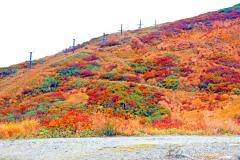 山道,アウトドア,秋,屋外,晴れ