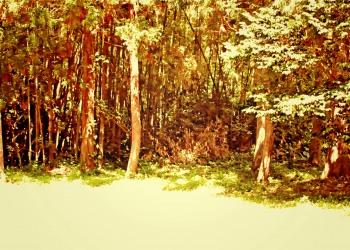 林道,アウトドア,屋外,夏,晴れ,ヴィンテージ