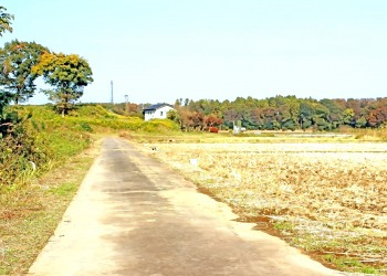 林道,アウトドア,晴れ,屋外,秋