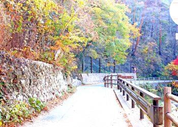 山道,村,屋外,秋,晴れ