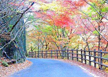 山道,アウトドア,屋外,秋,晴れ