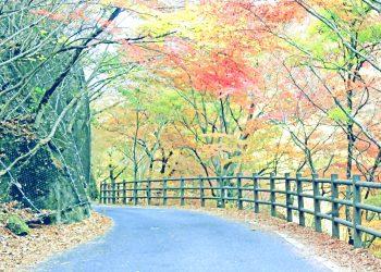 山道,アウトドア,屋外,秋,晴れ,昭和レトロ