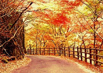 山道,アウトドア,屋外,秋,晴れ,ヴィンテージ