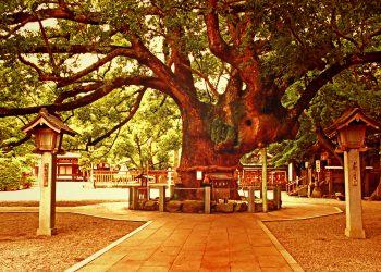 神社, 町, 和, 屋外, 夏, 曇り,ヴィンテージ