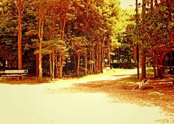 公園, 町, 屋外, 夏, 晴れ,ヴィンテージ