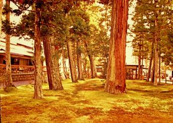 神社,町,屋外,秋,ヴィンテージ