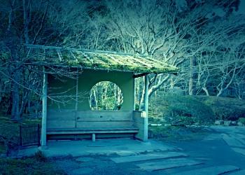 日本庭園,和,屋外,秋,晴れ,ホラー
