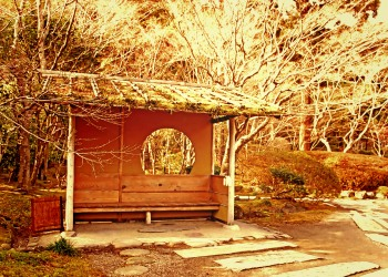 日本庭園,和,屋外,秋,晴れ,ヴィンテージ