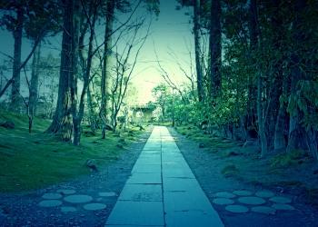 神社,和,屋外,冬,晴れ,ホラー