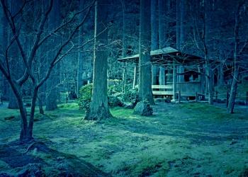 寺,日本庭園,和,冬,屋外,ホラー